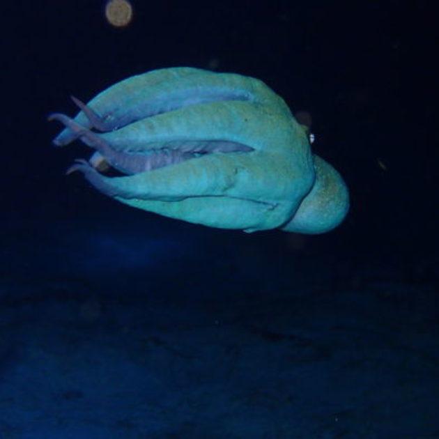 科租美島(Cozumel island)美洲遊輪必停之島  最受歐美潛客青睞的加勒比海潛水勝地